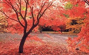 autumn-walks-1_2020688b